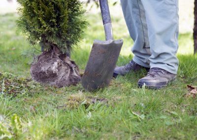 GMS Gartenmanagement Schäfer Leistungen